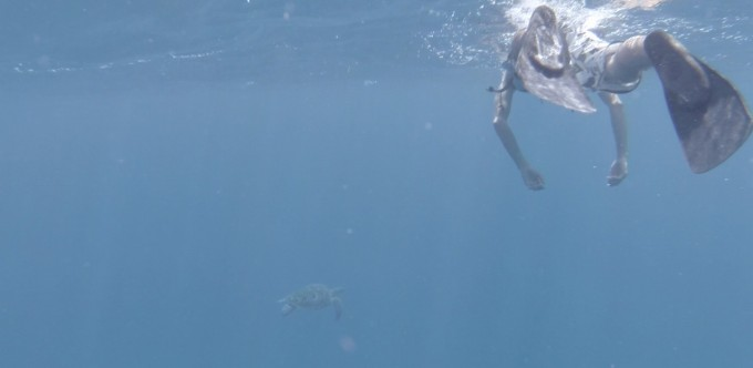 ウミガメ④