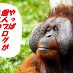 s-monkey-428032_1280a
