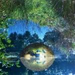s-nature-974819_1280