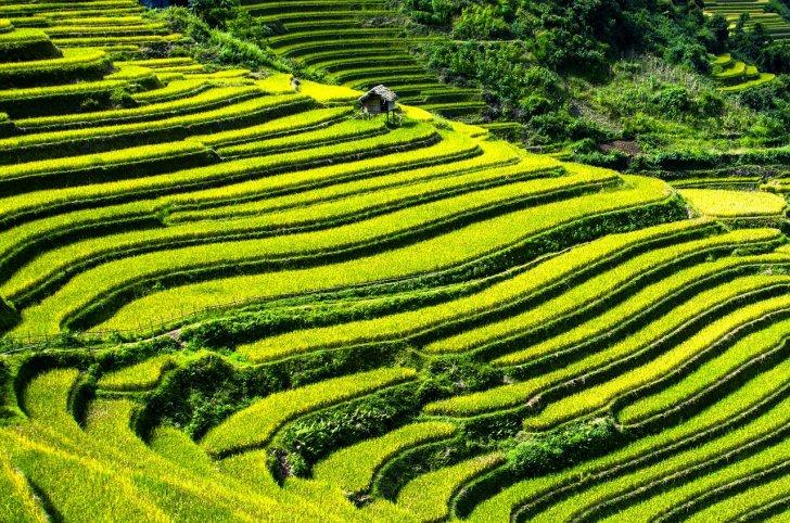 s-rice-terraces