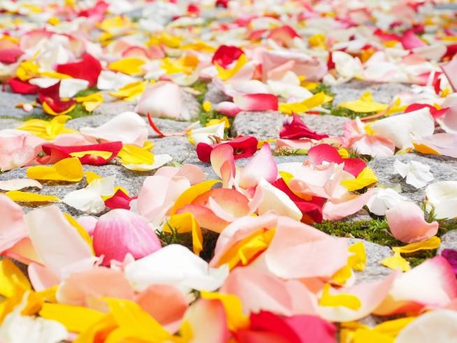 s-rose-petals-693570_1280