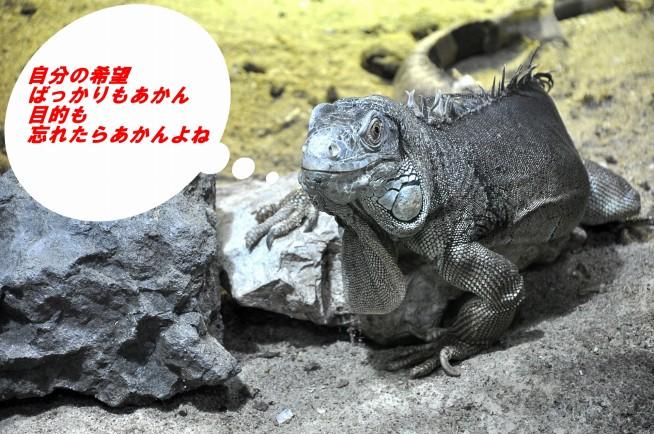s-lizard-248705_1920a