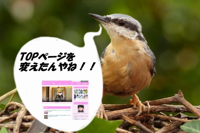 s-bird-861770_1920ああ