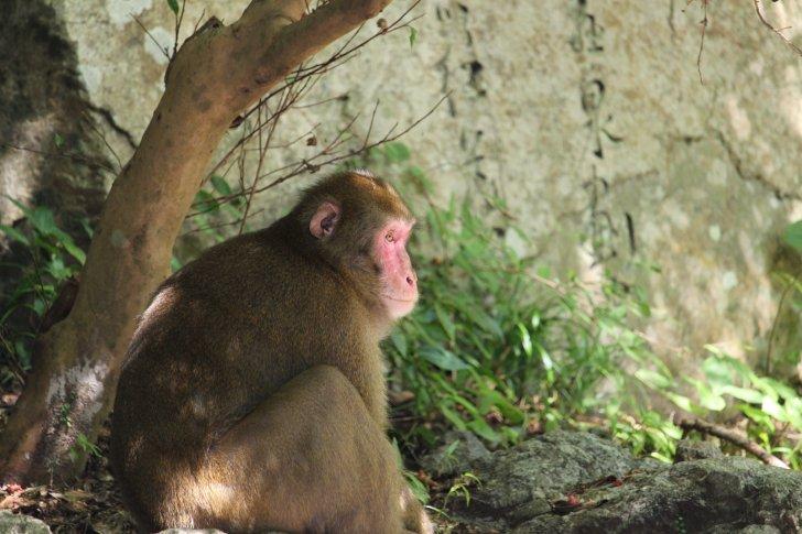 箕面の滝にいる猿