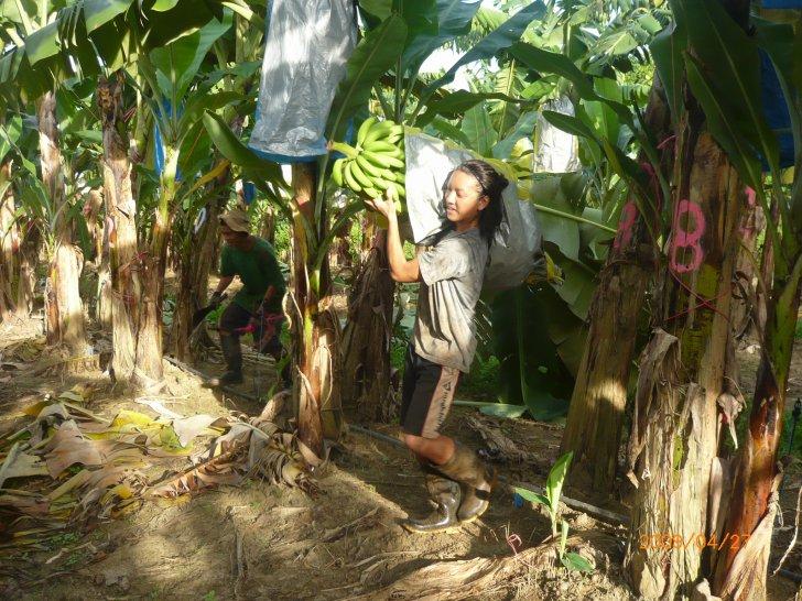 バナナのファームで働いていた頃