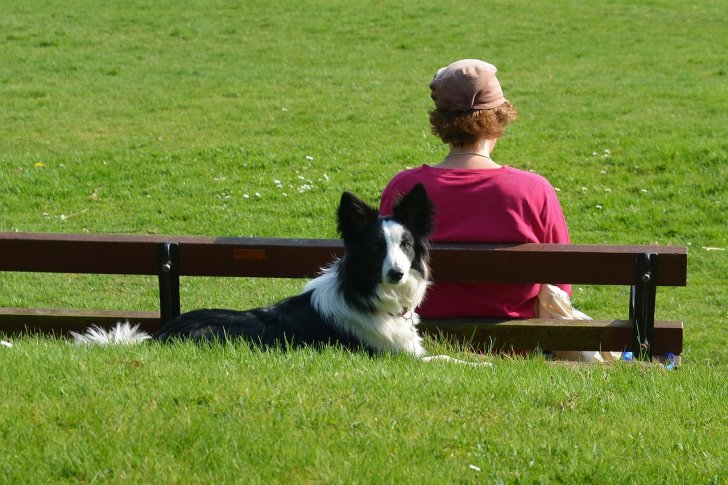 s-border-collie