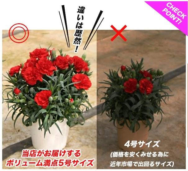 お花 サイズ 5号