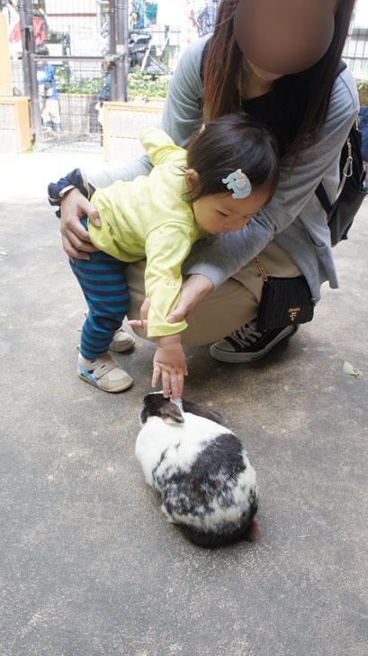 ウサギと触れ合う息子