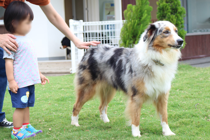 わんわんガーデンの犬