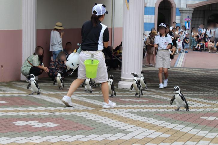 よちよち歩くペンギン