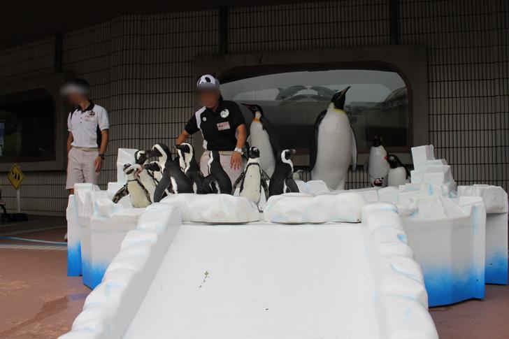 ペンギンが集まってる写真