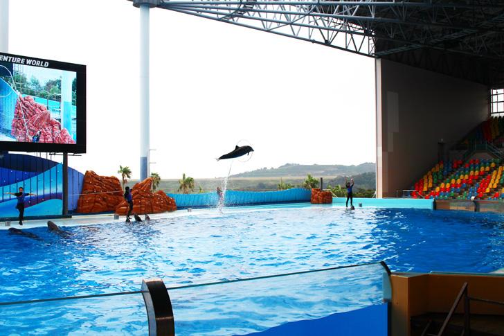 イルカが輪をくぐるジャンプ