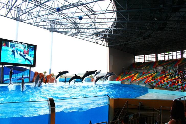 イルカのジャンプの共演