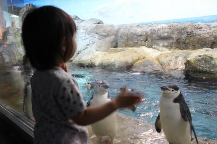 ペンギン王国にいるペンギン
