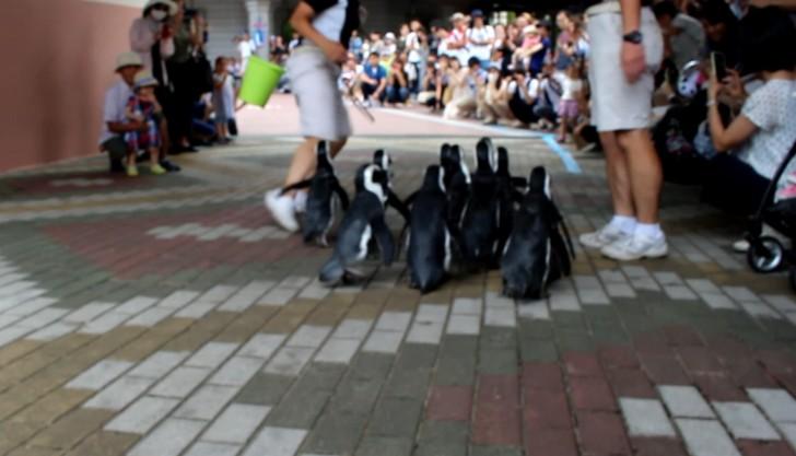 ペンギンダッシュ