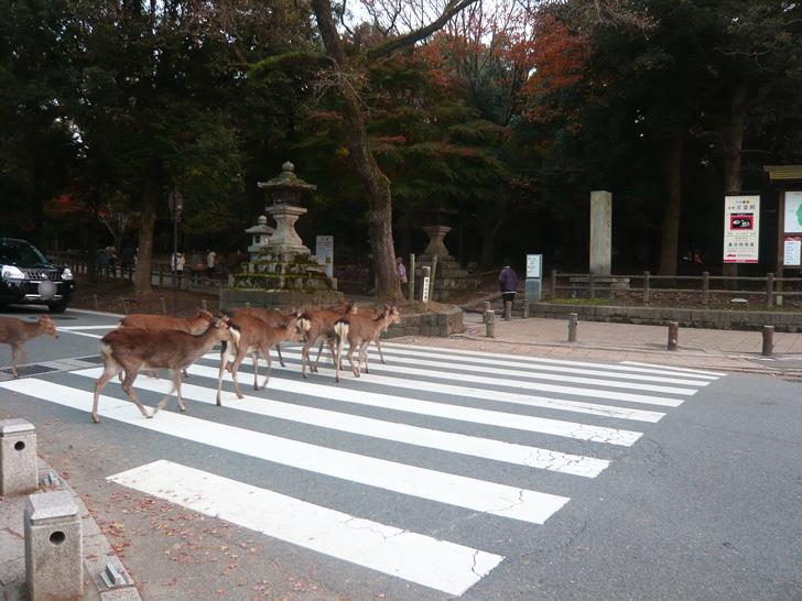 鹿が歩いている写真