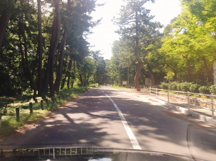 気比の松原近くの道